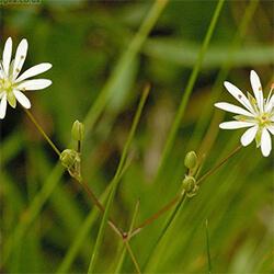 Marsh Stichwort