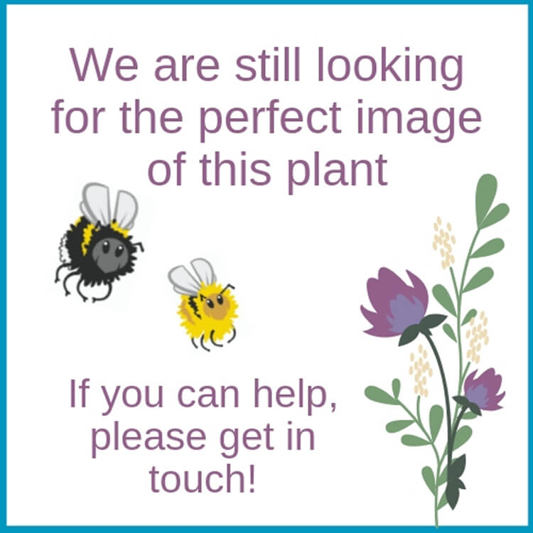 Bee-kind-no-image.jpg